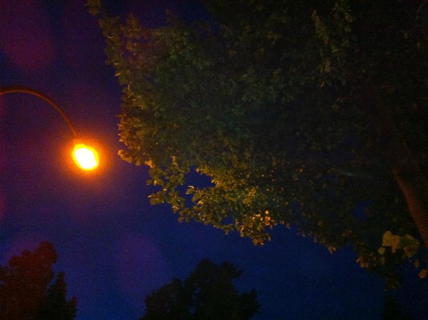 Baum und Lampe