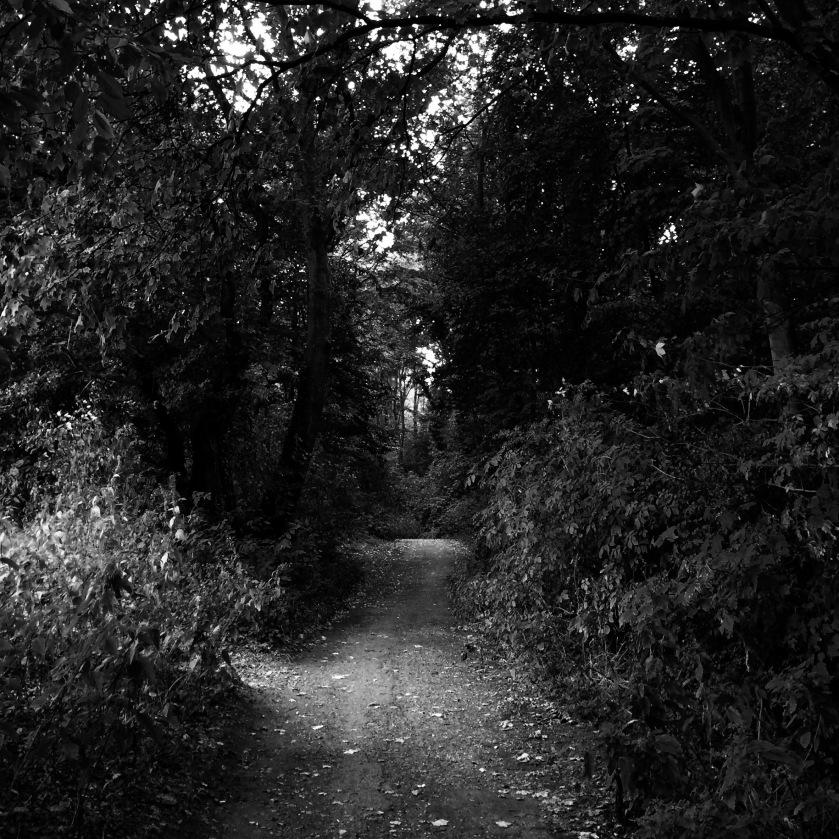 Wald, Forest, schwarzweiß, black and white, sadness, Trauer