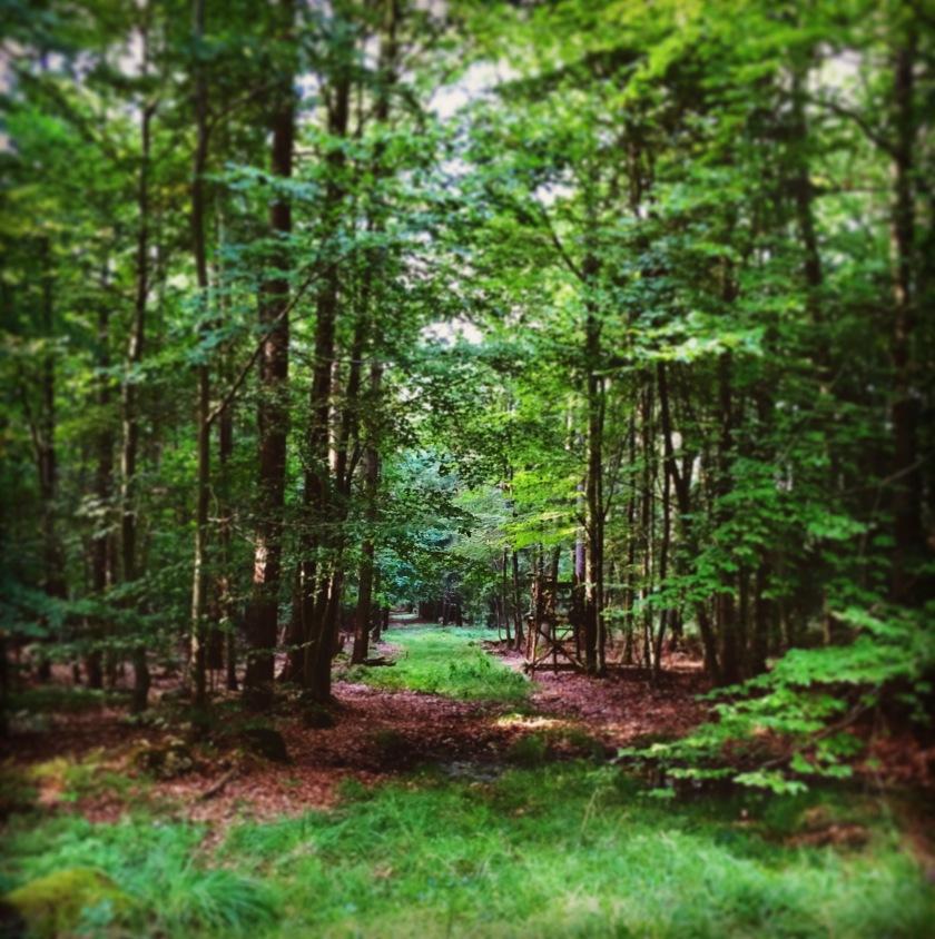 Im Wald (c) Kathrin Eß