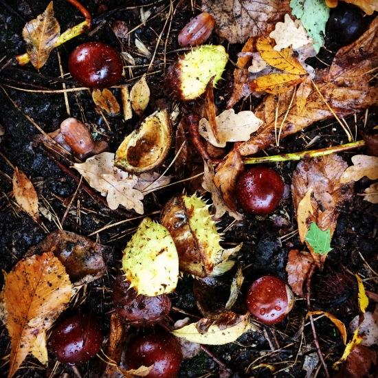 Kastanien im Herbst (c) Kathrin Eß 2016
