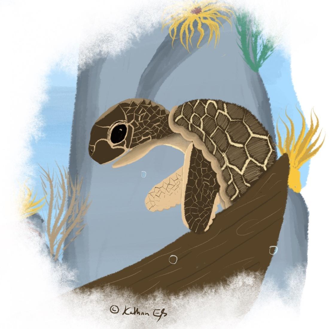 Meeresschildkröte (c) KathrinEß 2018
